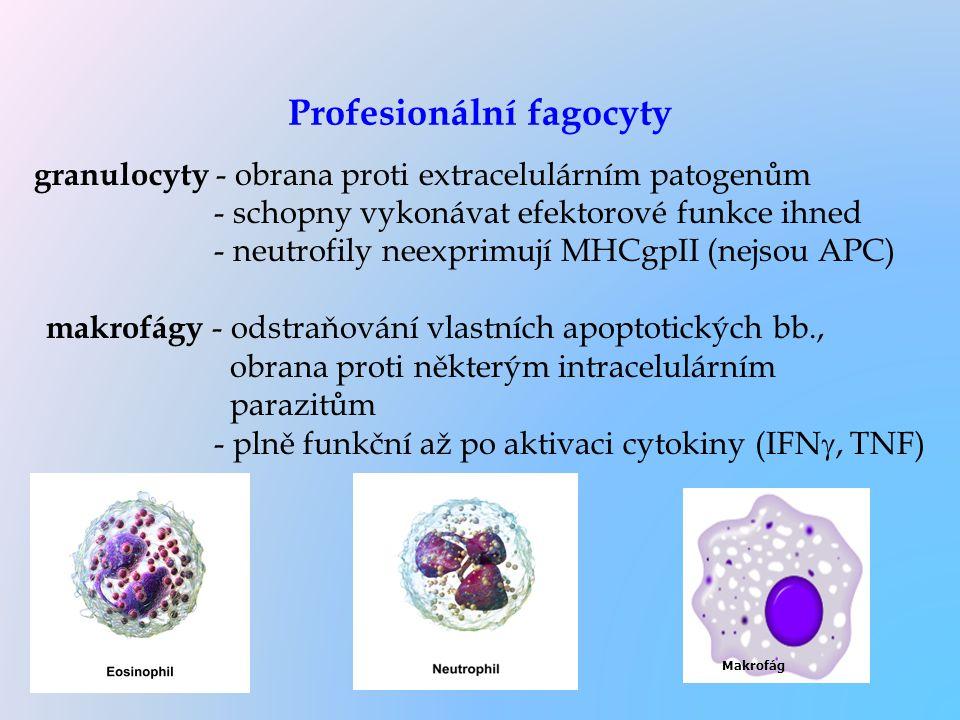 Profesionální fagocyty