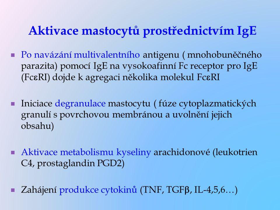 Aktivace mastocytů prostřednictvím IgE