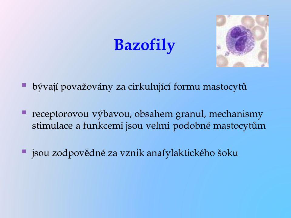Bazofily bývají považovány za cirkulující formu mastocytů