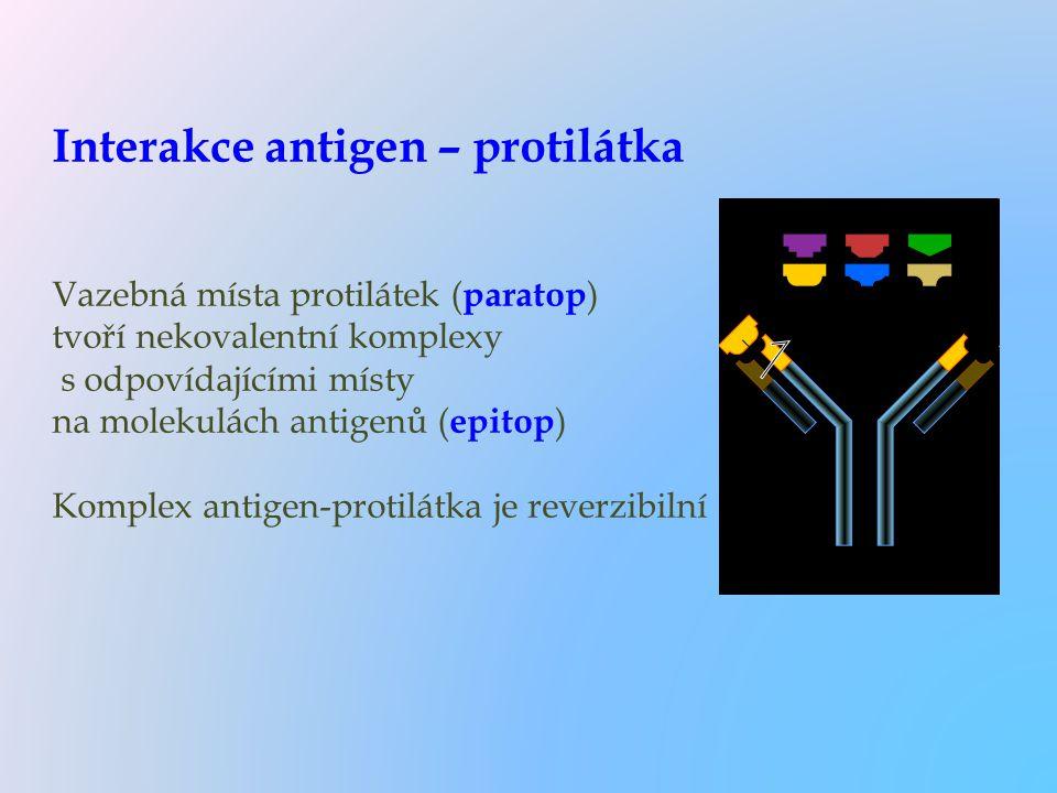 Interakce antigen – protilátka Vazebná místa protilátek (paratop) tvoří nekovalentní komplexy s odpovídajícími místy na molekulách antigenů (epitop) Komplex antigen-protilátka je reverzibilní