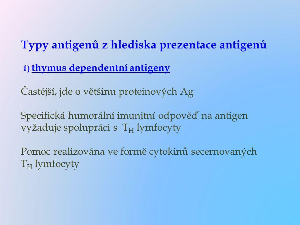 Typy antigenů z hlediska prezentace antigenů 1) thymus dependentní antigeny Častější, jde o většinu proteinových Ag Specifická humorální imunitní odpověď na antigen vyžaduje spolupráci s TH lymfocyty Pomoc realizována ve formě cytokinů secernovaných TH lymfocyty