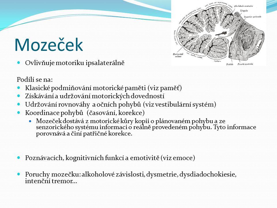 Mozeček Ovlivňuje motoriku ipsalaterálně Podílí se na: