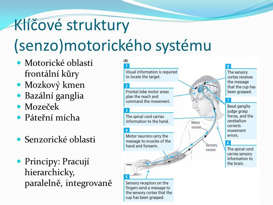 Klíčové struktury (senzo)motorického systému