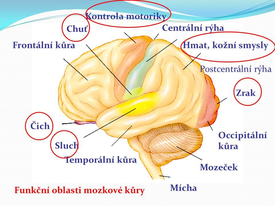 Funkční oblasti mozkové kůry