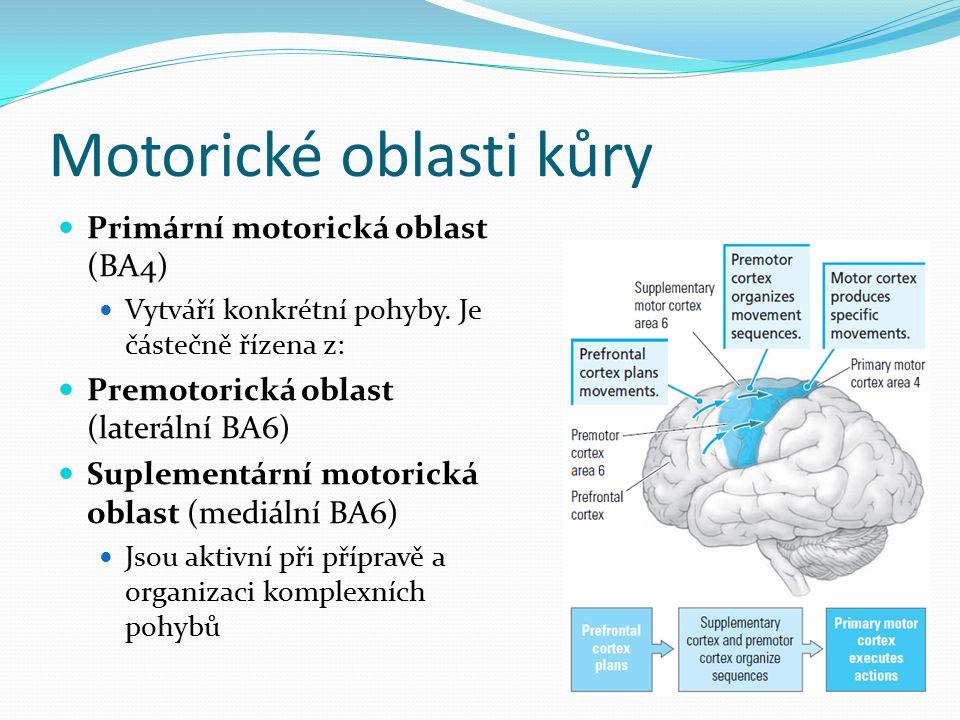 Motorické oblasti kůry