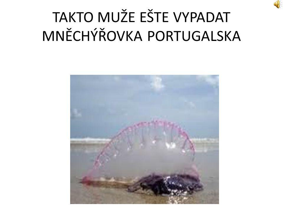 TAKTO MUŽE EŠTE VYPADAT MNĚCHÝŘOVKA PORTUGALSKA