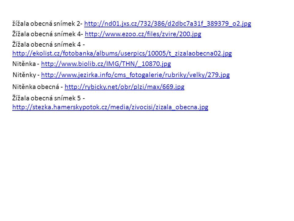 žížala obecná snímek 2- http://nd01. jxs