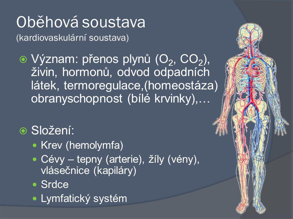 Oběhová soustava (kardiovaskulární soustava)