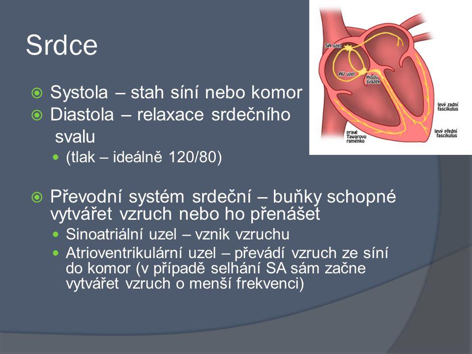 Srdce Systola – stah síní nebo komor Diastola – relaxace srdečního