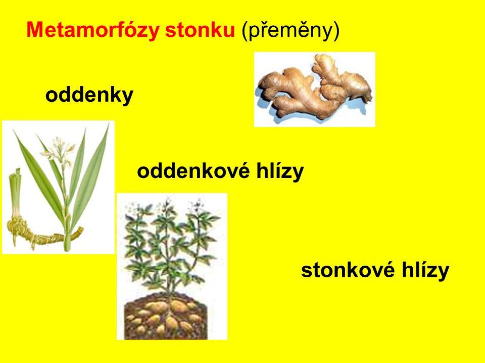 Metamorfózy stonku (přeměny)