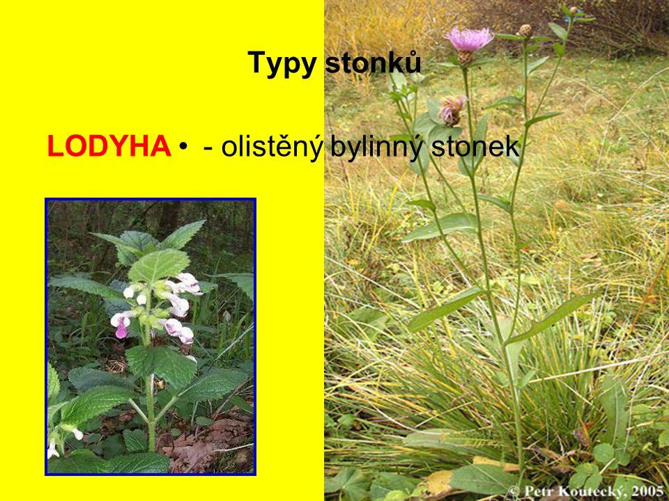 Typy stonků LODYHA - olistěný bylinný stonek