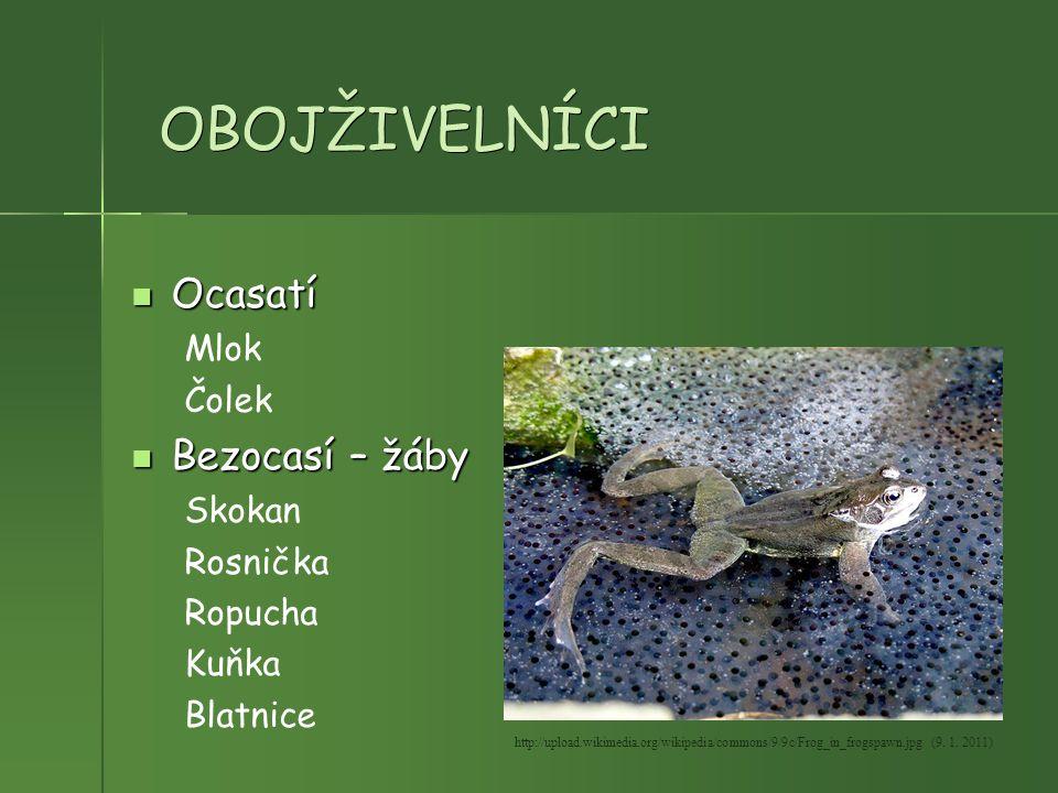 OBOJŽIVELNÍCI Ocasatí Bezocasí – žáby Mlok Čolek Skokan Rosnička