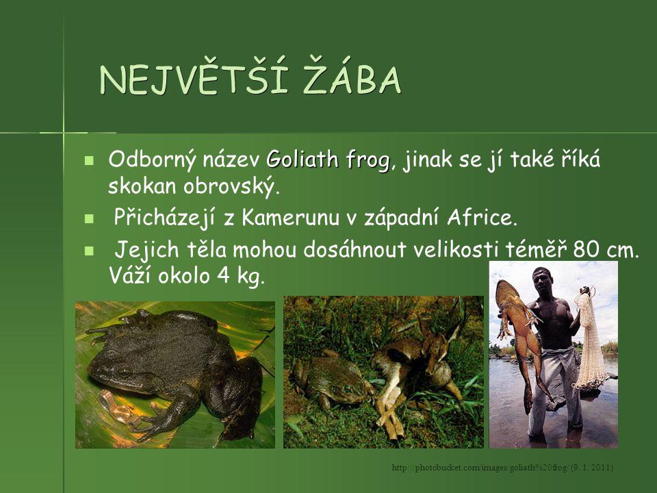 NEJVĚTŠÍ ŽÁBA Odborný název Goliath frog, jinak se jí také říká skokan obrovský. Přicházejí z Kamerunu v západní Africe.