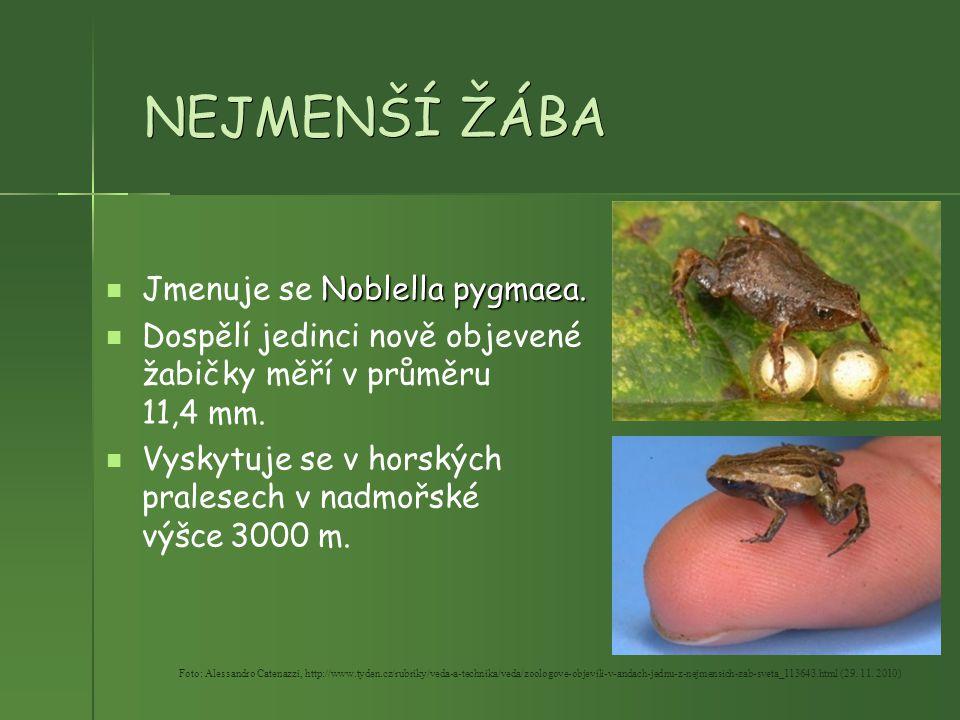 NEJMENŠÍ ŽÁBA Jmenuje se Noblella pygmaea.