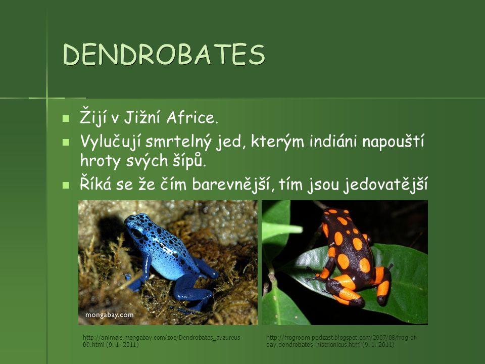 DENDROBATES Žijí v Jižní Africe.