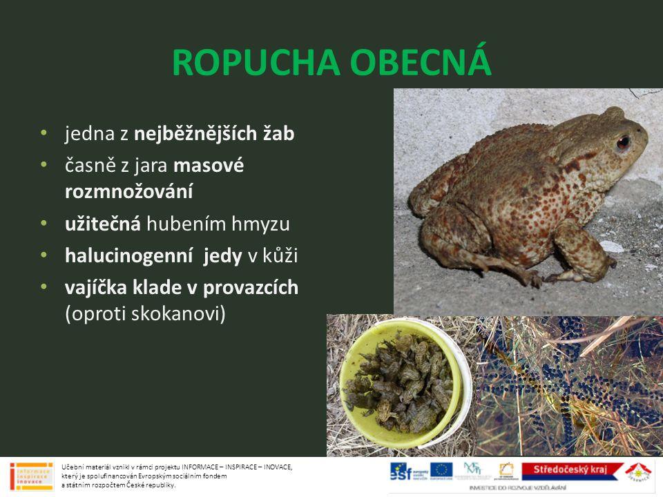 ROPUCHA OBECNÁ jedna z nejběžnějších žab