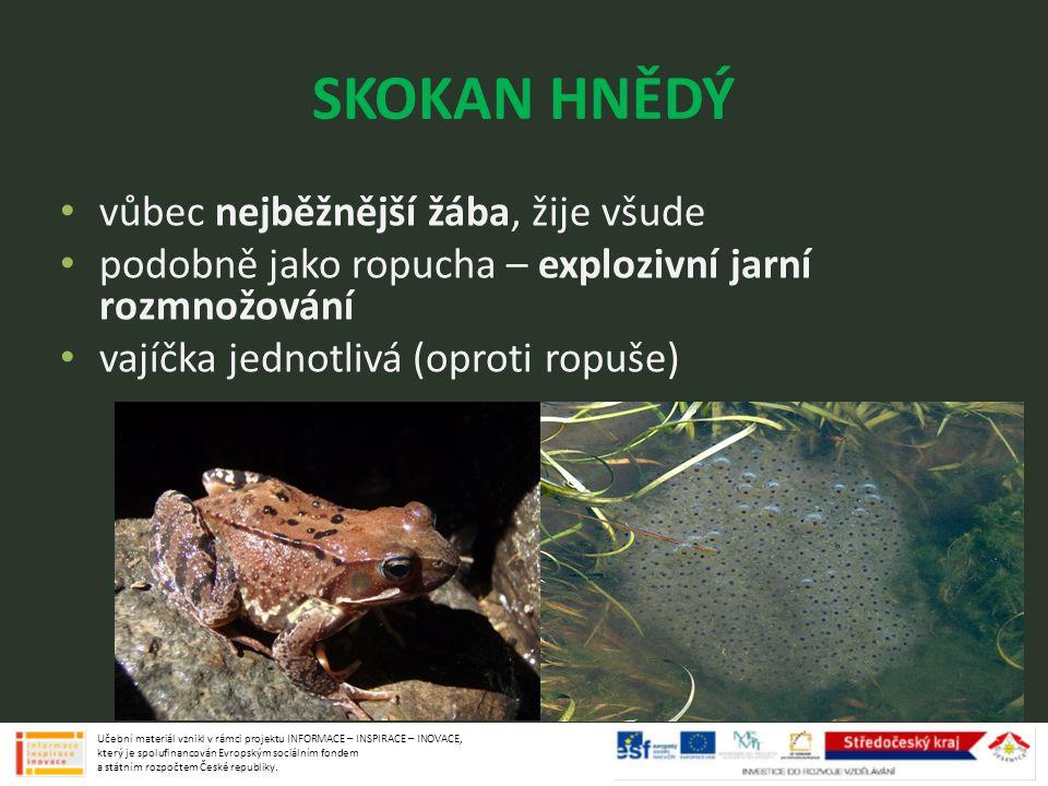SKOKAN HNĚDÝ vůbec nejběžnější žába, žije všude