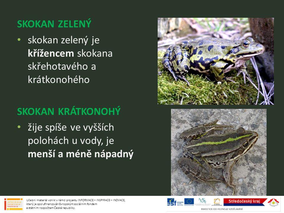 skokan zelený je křížencem skokana skřehotavého a krátkonohého