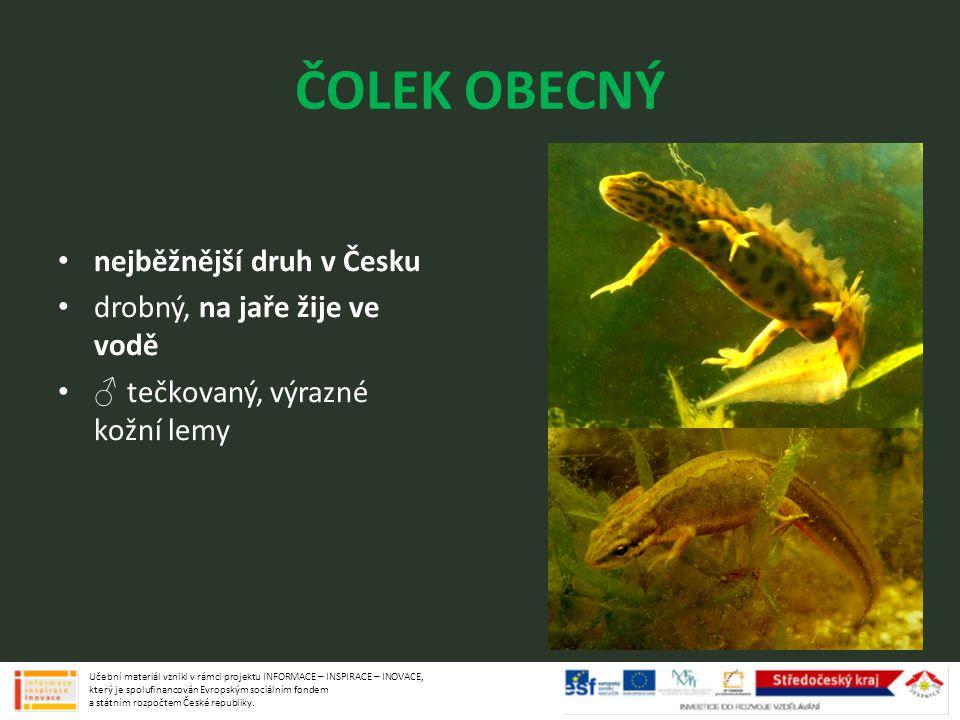 ČOLEK OBECNÝ nejběžnější druh v Česku drobný, na jaře žije ve vodě