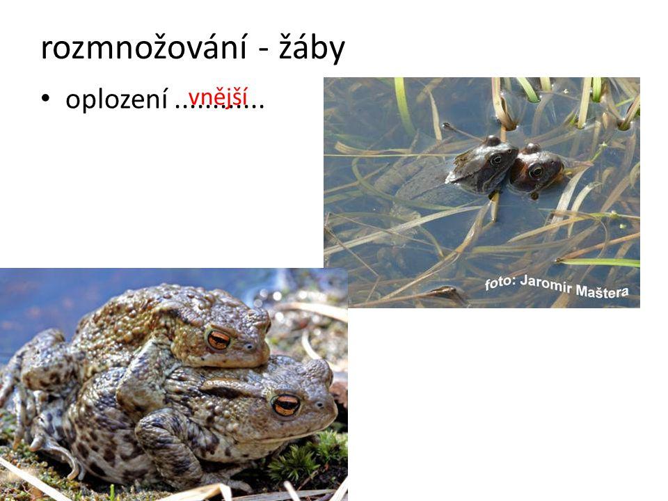 rozmnožování - žáby oplození ............ vnější