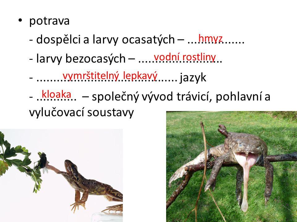 - dospělci a larvy ocasatých – .................