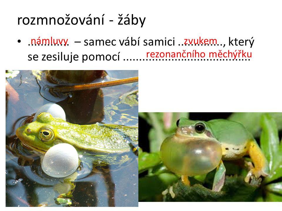 rozmnožování - žáby ............. – samec vábí samici .............., který se zesiluje pomocí ........................................