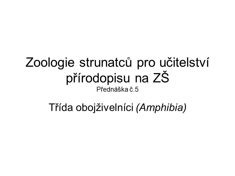 Zoologie strunatců pro učitelství přírodopisu na ZŠ Přednáška č.5