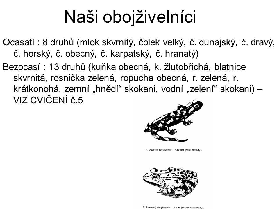 Naši obojživelníci Ocasatí : 8 druhů (mlok skvrnitý, čolek velký, č. dunajský, č. dravý, č. horský, č. obecný, č. karpatský, č. hranatý)