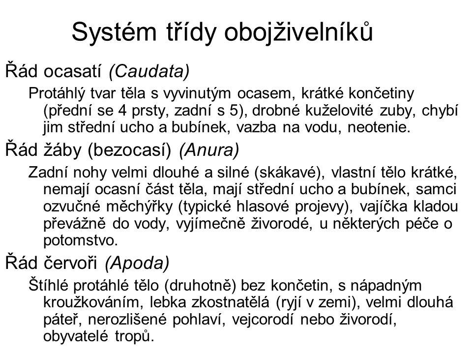 Systém třídy obojživelníků