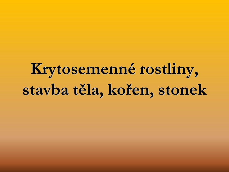 Krytosemenné rostliny, stavba těla, kořen, stonek