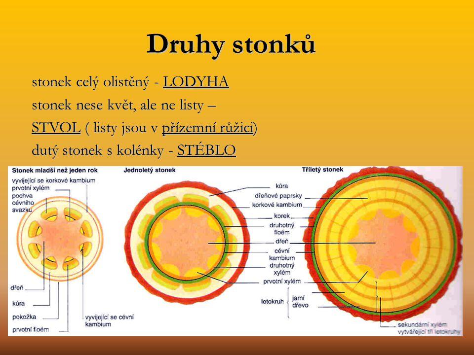 Druhy stonků stonek celý olistěný - LODYHA
