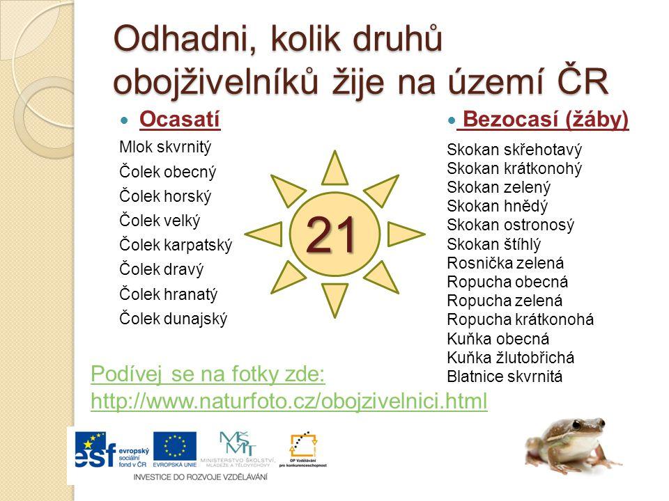 Odhadni, kolik druhů obojživelníků žije na území ČR