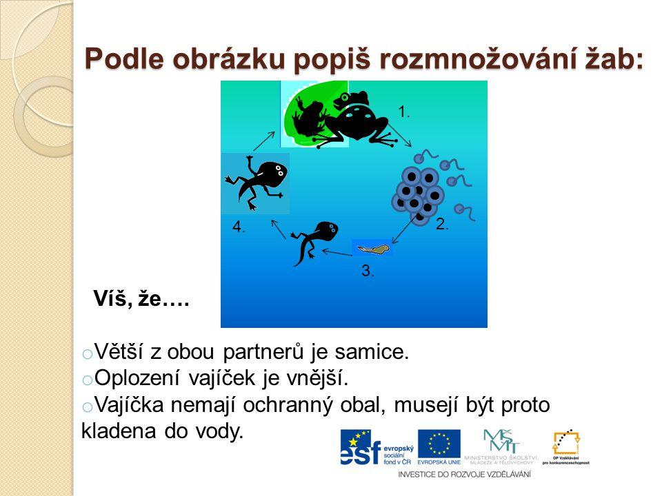 Podle obrázku popiš rozmnožování žab: