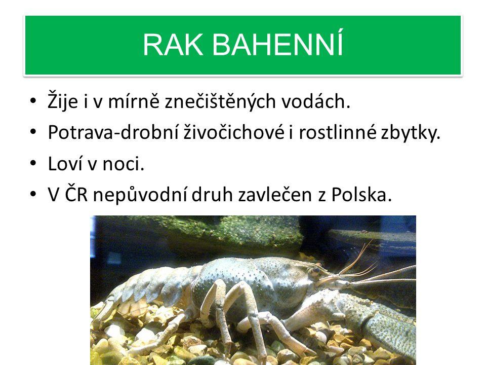 RAK BAHENNÍ Žije i v mírně znečištěných vodách.