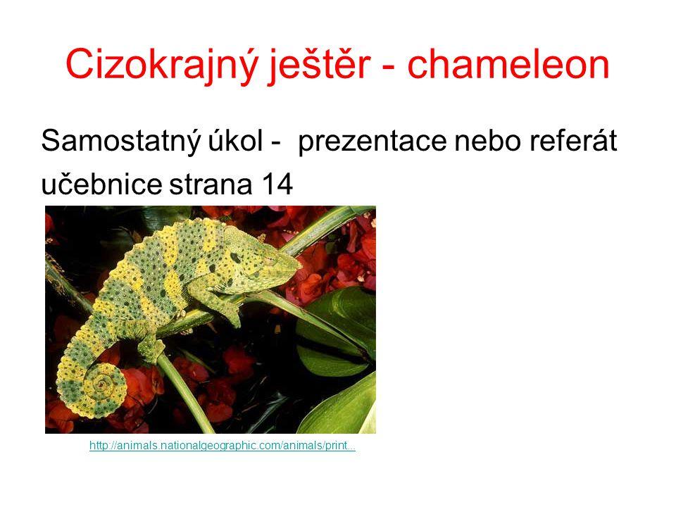 Cizokrajný ještěr - chameleon