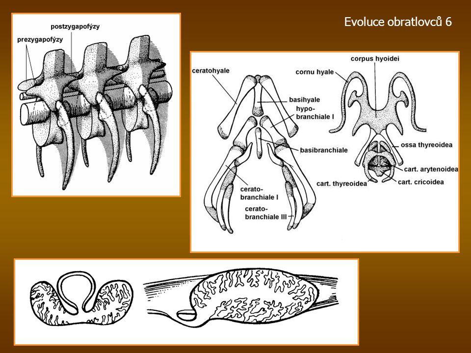 Evoluce obratlovců 6
