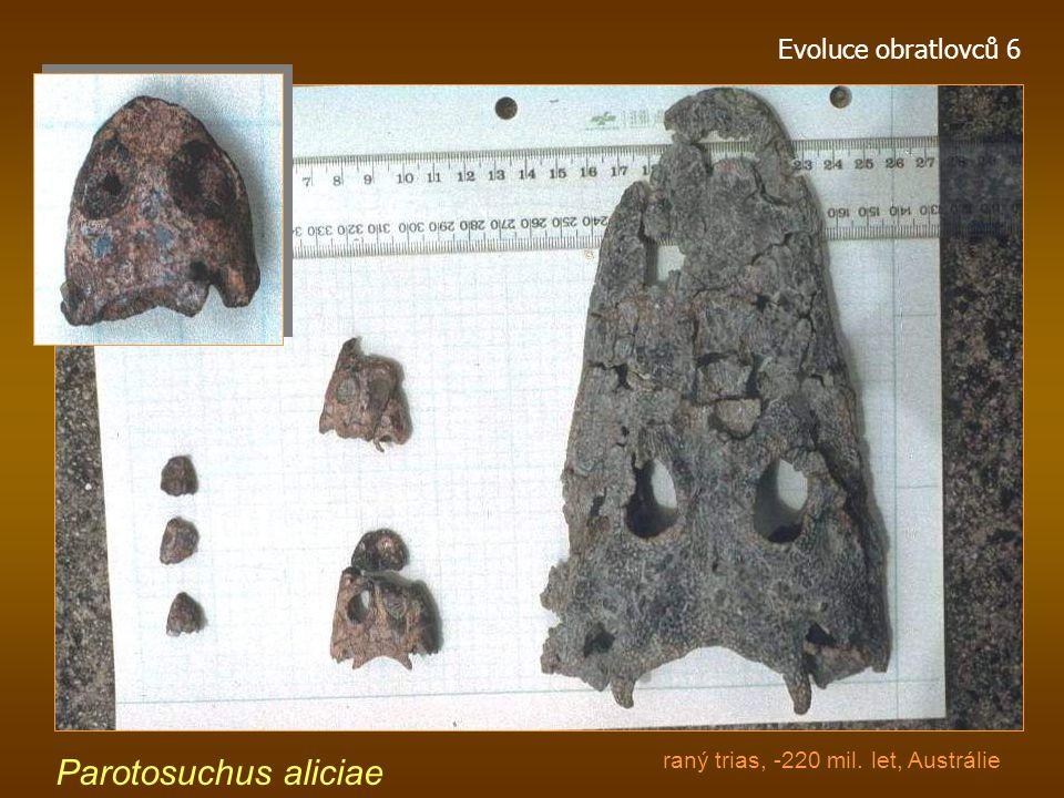 Parotosuchus aliciae Evoluce obratlovců 6
