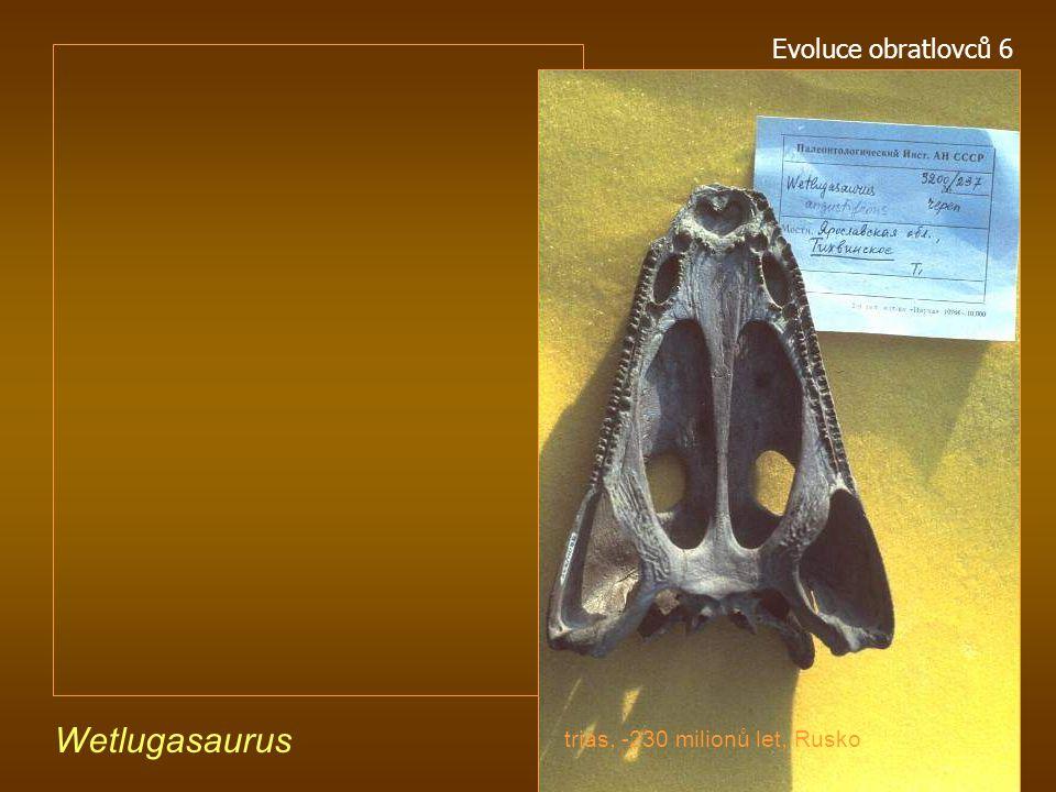 Evoluce obratlovců 6 Wetlugasaurus trias, -230 milionů let, Rusko