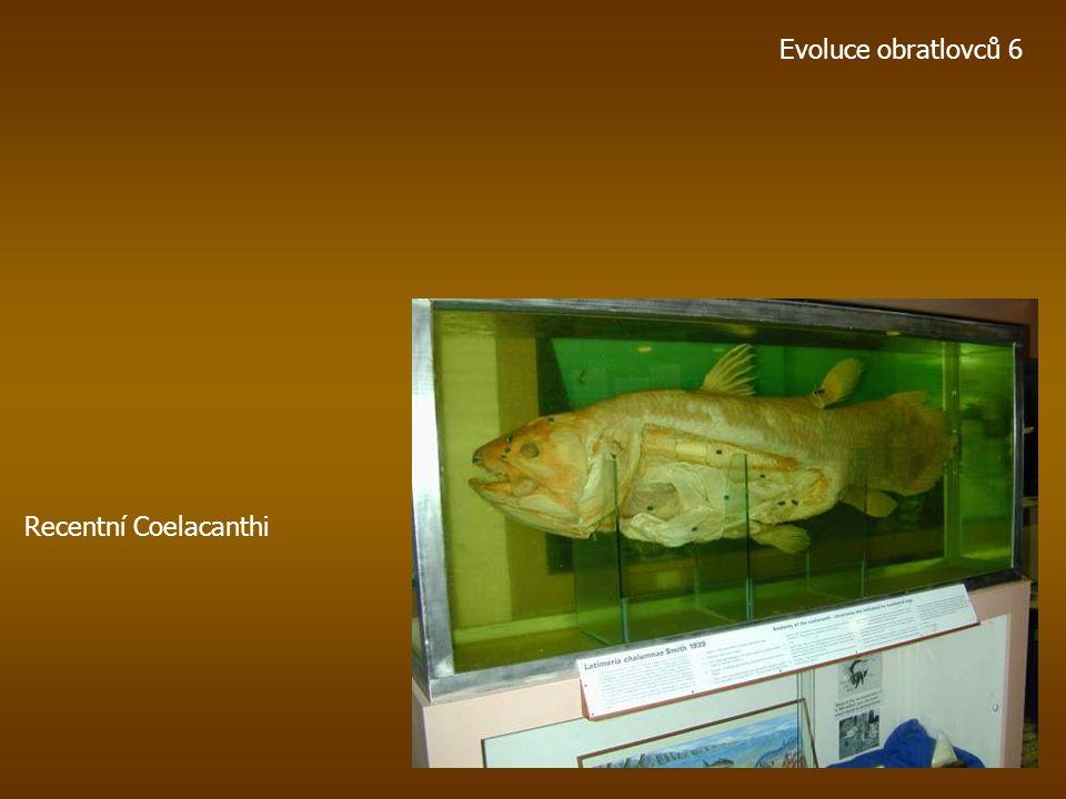 Evoluce obratlovců 6 Recentní Coelacanthi