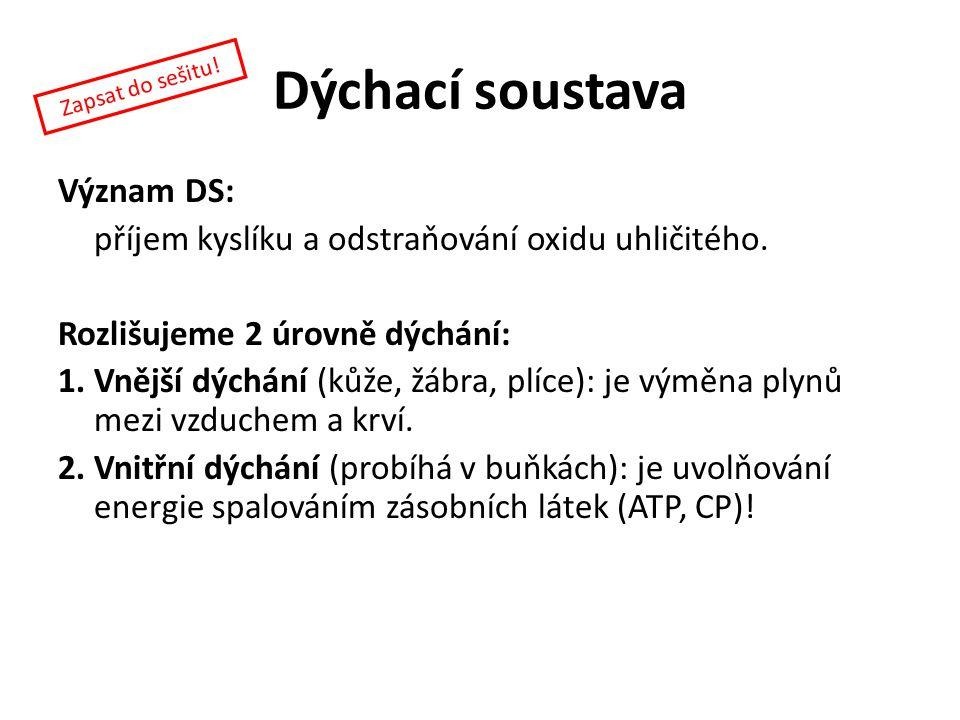 Dýchací soustava Význam DS: