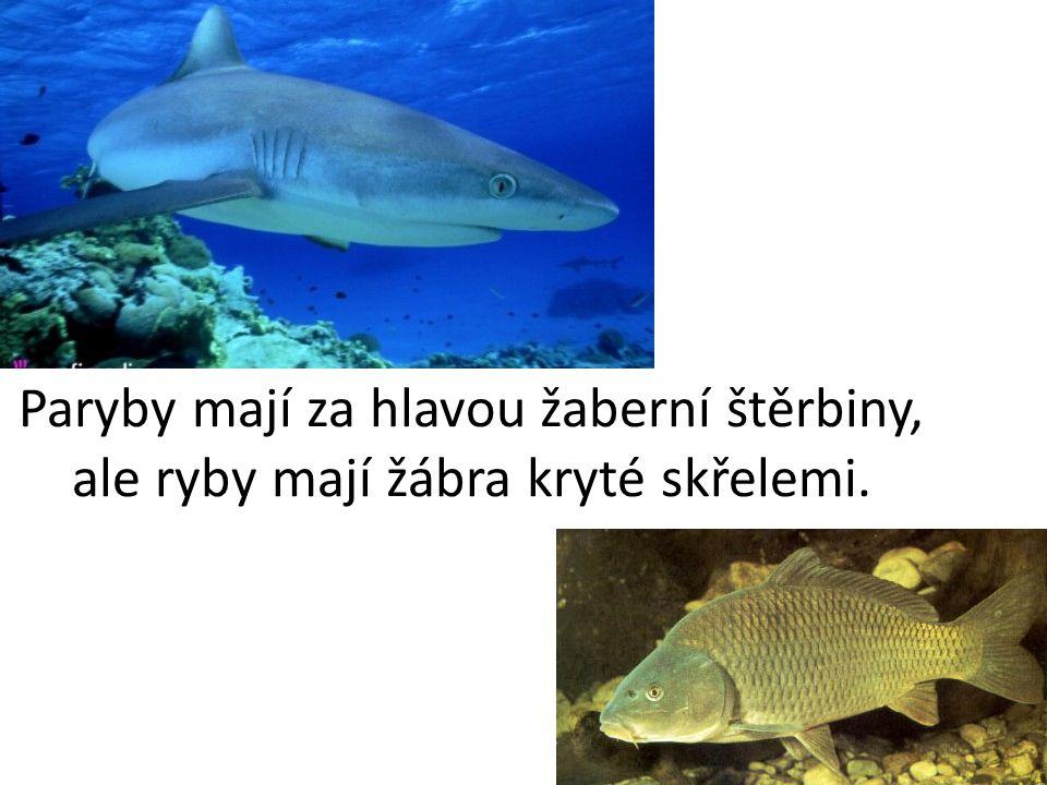Paryby mají za hlavou žaberní štěrbiny, ale ryby mají žábra kryté skřelemi.