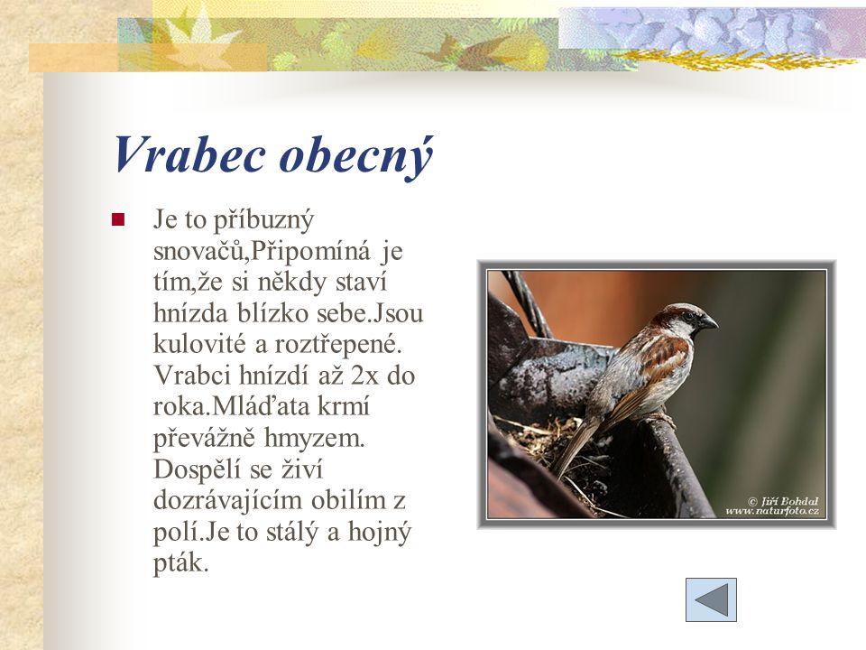 Vrabec obecný