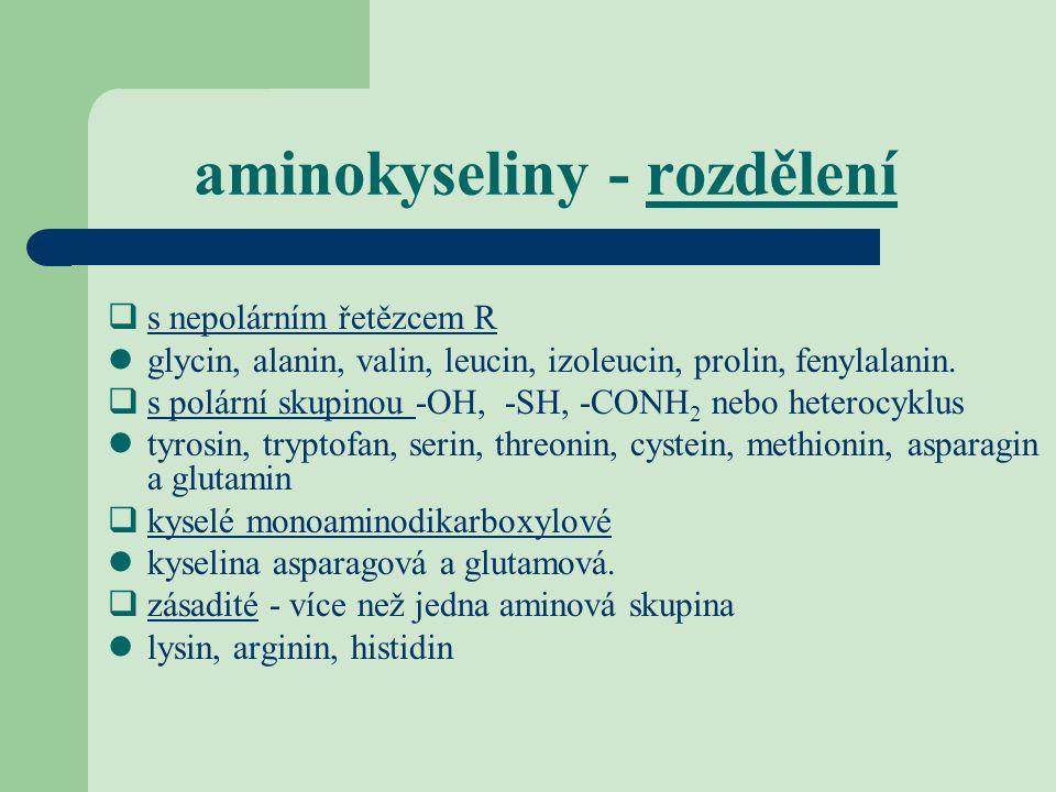 aminokyseliny - rozdělení