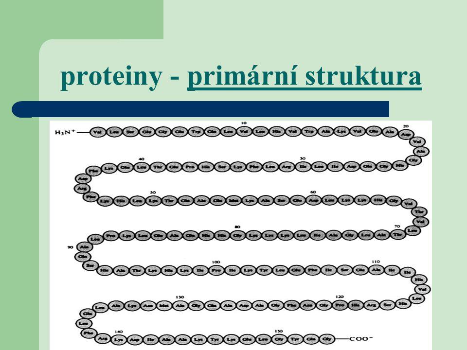 proteiny - primární struktura