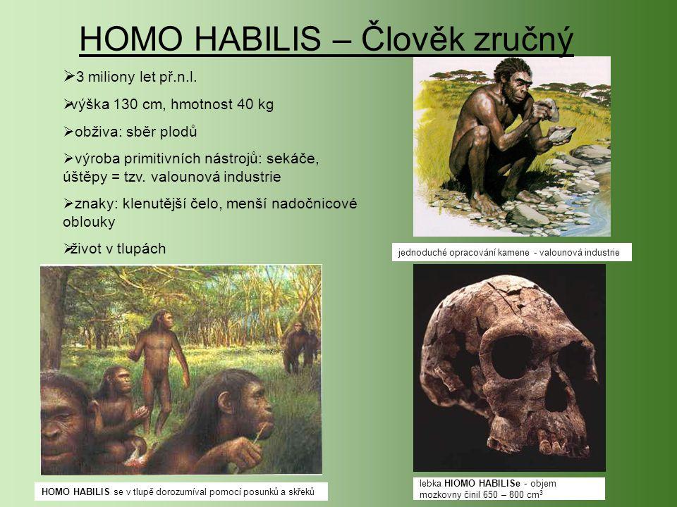 HOMO HABILIS – Člověk zručný