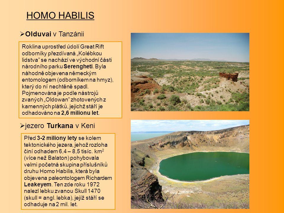 HOMO HABILIS Olduvai v Tanzánii jezero Turkana v Keni