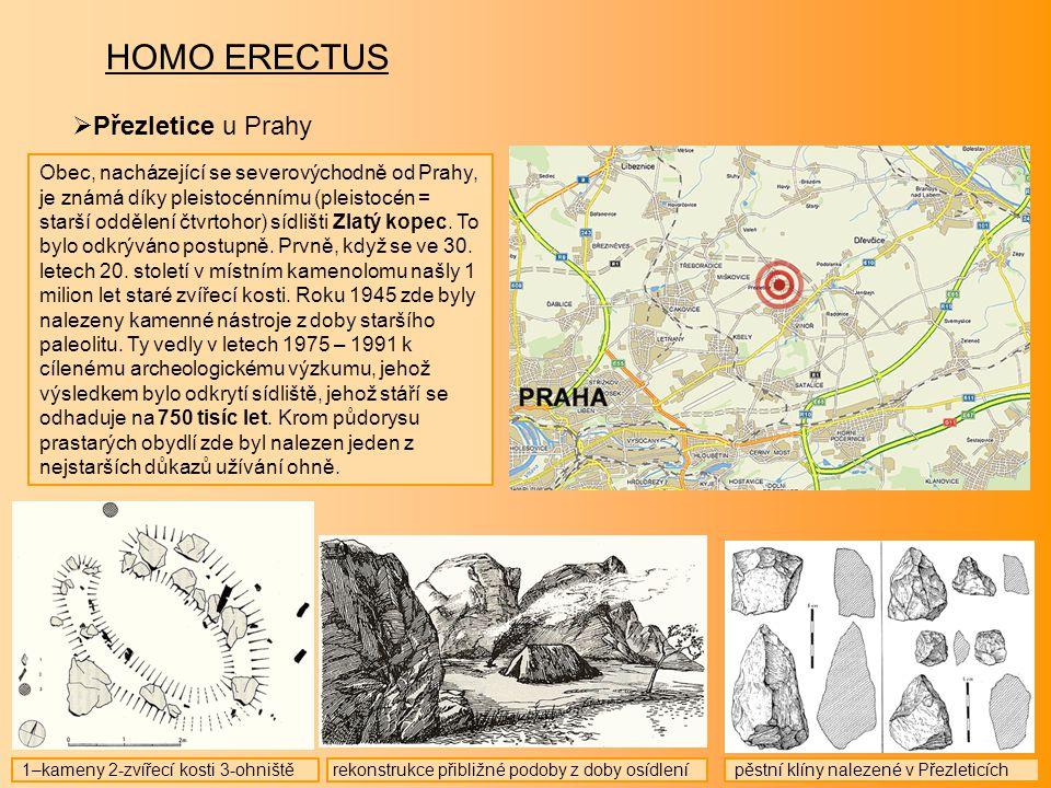 HOMO ERECTUS Přezletice u Prahy