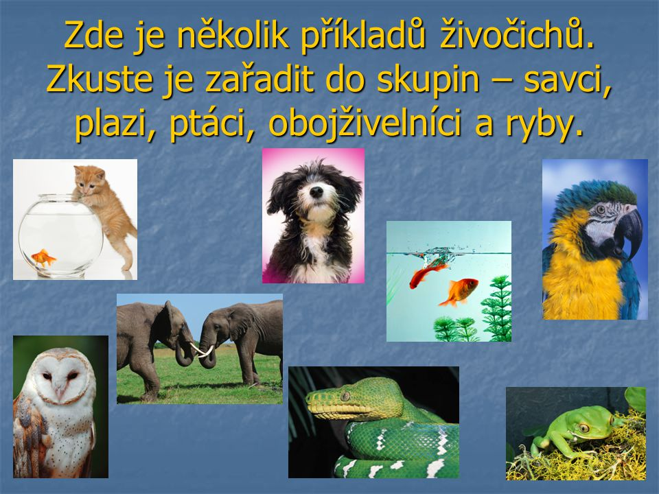 Zde je několik příkladů živočichů
