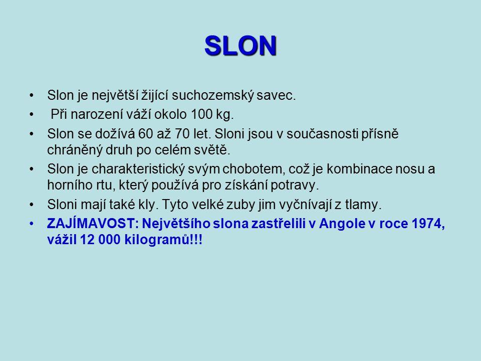 SLON Slon je největší žijící suchozemský savec.
