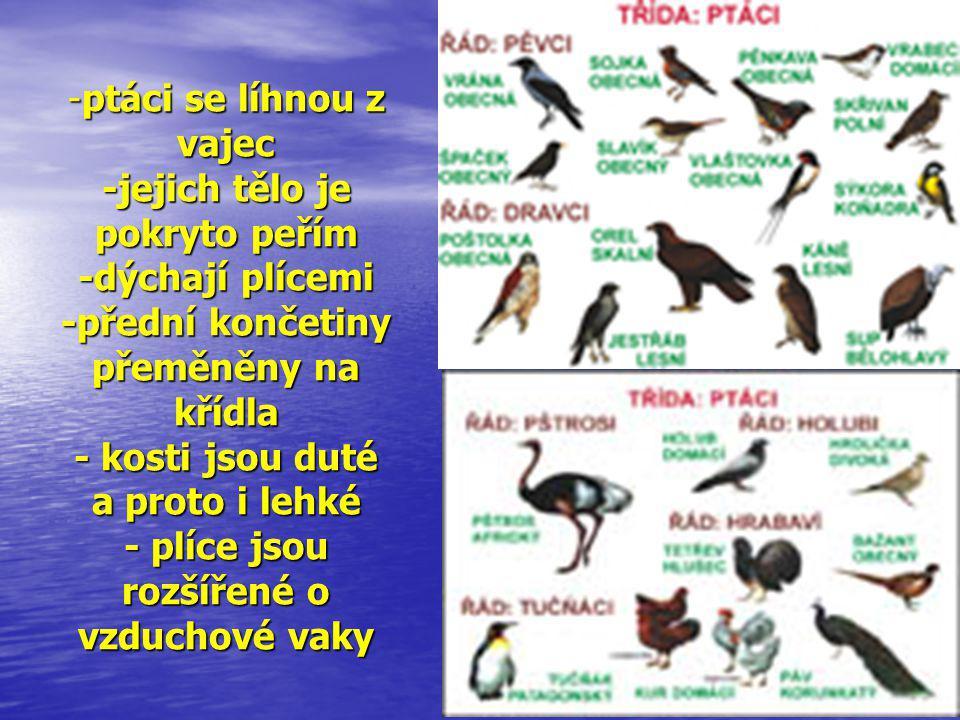 ptáci se líhnou z vajec -jejich tělo je pokryto peřím -dýchají plícemi -přední končetiny přeměněny na křídla - kosti jsou duté a proto i lehké - plíce jsou rozšířené o vzduchové vaky